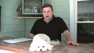How To Use The Nati Principle To Grow Your Dog Training Business