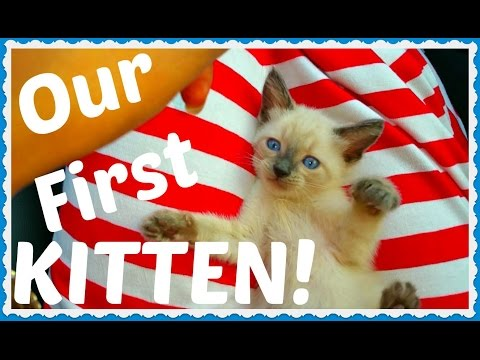 VLOG: Our First Kitten (Siamese) ★ 100 ★