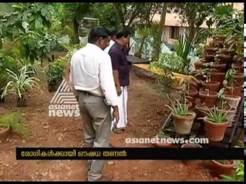 Ayurvedic herbs garden at Thrissur District Ayurveda Hospital