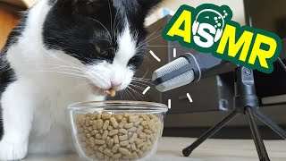 ASMR. Crunch of a hungry cat