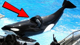 Things You Might Not Have Known About SeaWorld!