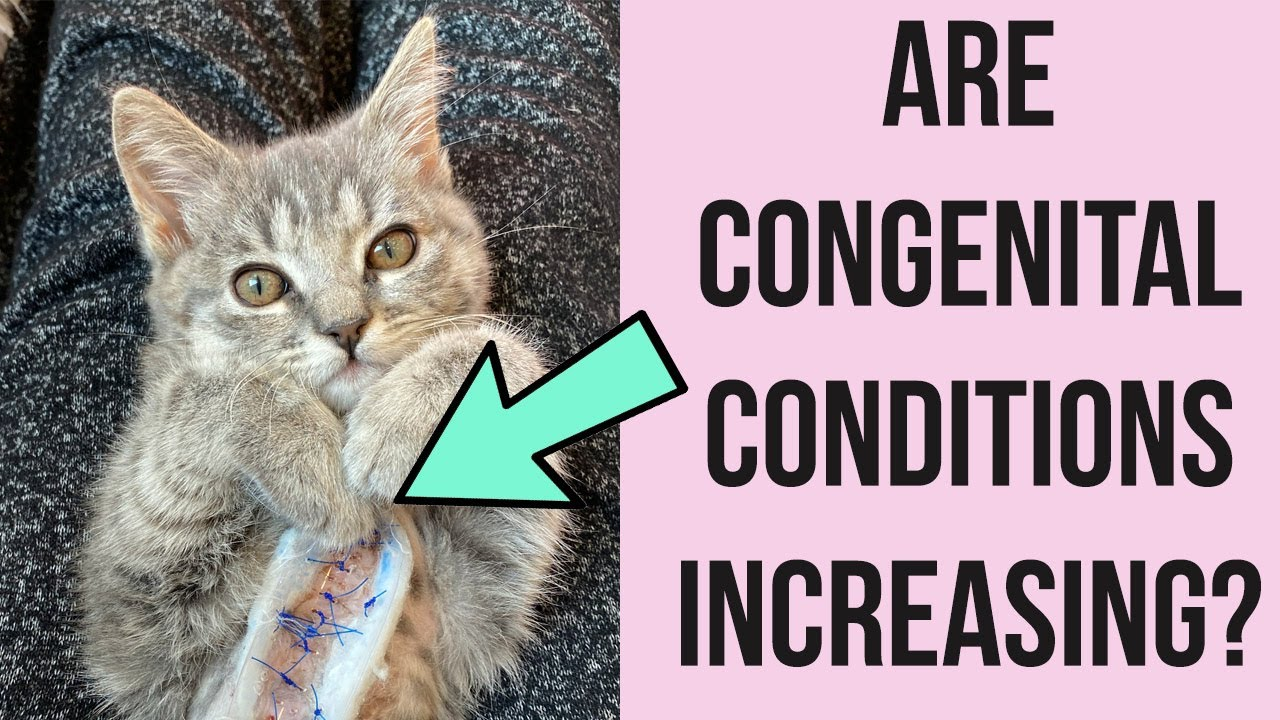 Are More Kittens Being Born With Medical Conditions?!