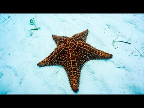Shocking Facts About Starfish. Must Watch.