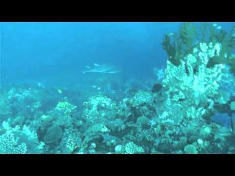 Scuba Dive Advisor // The Zoo @ Rainbow Reef - Taveuni Island, Fiji : Scuba Dive Advisor
