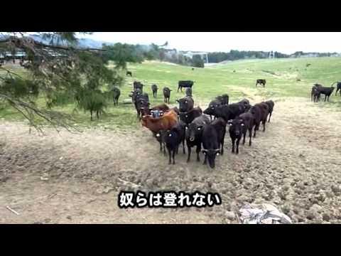 福島第一原発20km圏内に残された動物たち