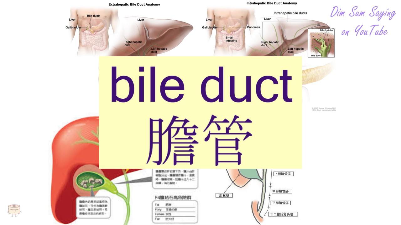 BILE DUCT\