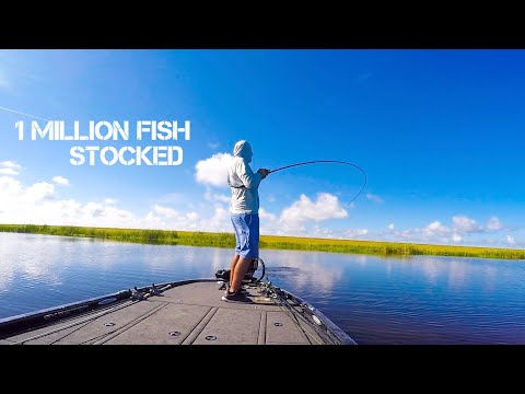 NEW Lake Stocked With 1 MILLION BASS (HEADWATERS LAKE/FELLSMERE RESERVOIR)