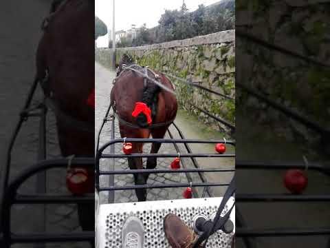 O pai Natal a Cavalo em Airao São João Baptista Guimarães ...quinta da Pereira