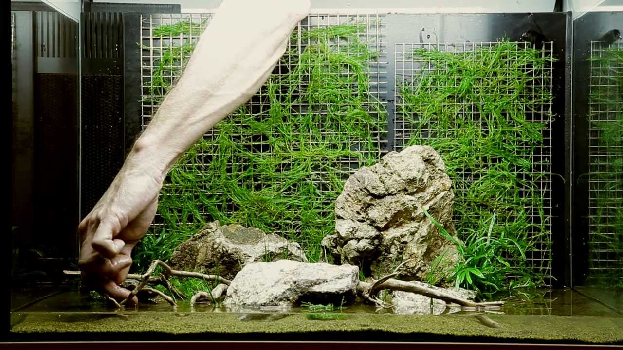 Layout 74 By Tropica   YouTube