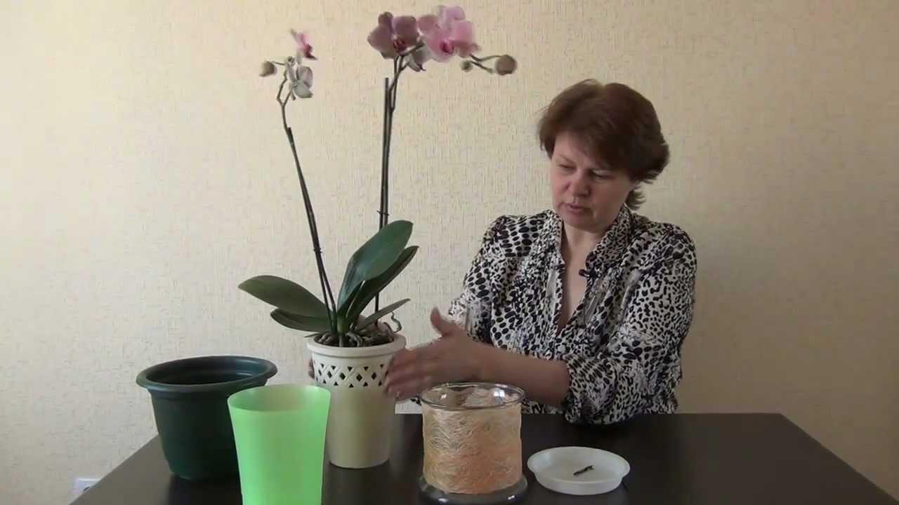 Какие горшки для орхидей нужны, как правильно выбрать емкость 42