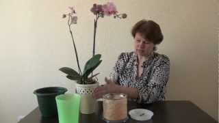 видео горшок для орхидеи