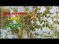 Ngintip Burung Madu Jawa Liar Suaranya Ngebren  Mp3 - Mp4 Download
