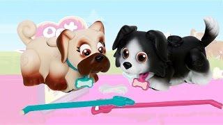 Pet Parade / Akademia Psiaka - 2 Pieski / 2 Dogs - EPEE - EP02227 - Recenzja