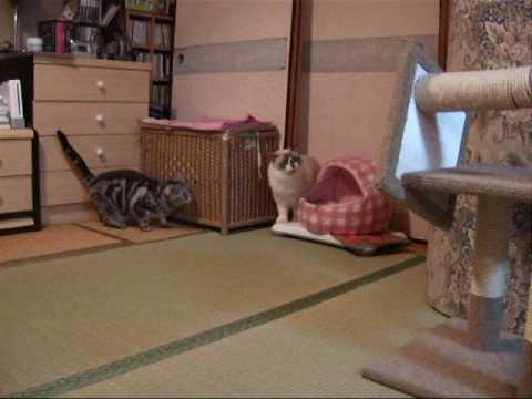 Download 待ち伏せする猫 ambush cat