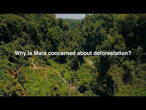Building deforestation-free supply chains with Mars