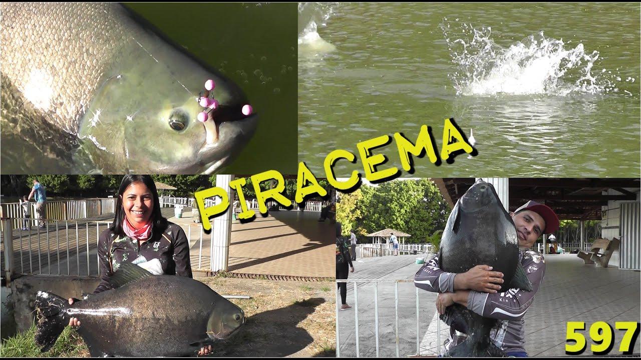 Pescaria 100% superfície de tambacus e tambaquis no Piracema - Fishingtur 597 Pesca e Pescaria