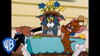 Том и Джерри Мышиная месть WB Kids