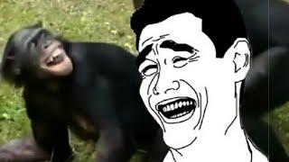 Tingkah hewan lucu,, bikin ngakak..