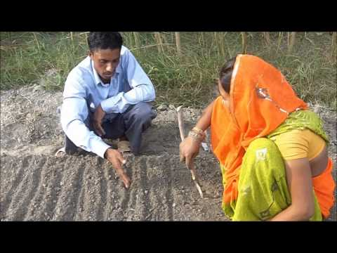 Nursery Bed Preparation Tomato Hindi Jeevika Bihar