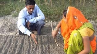 Nursery Bed Preparation for Tomato Hindi Jeevika Bihar
