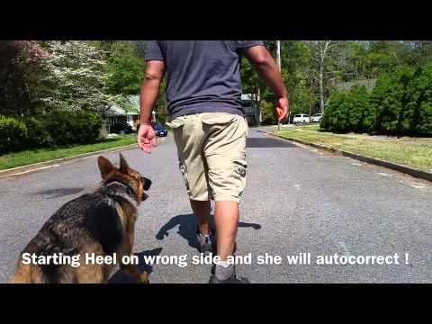 German Shepherd Training Tricks