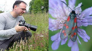How to Photograph Insects Tutorial: Hand-held with a Canon 100mm f/2.8 Lens