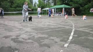 Выставка Курск 25.06.17 - Бест 9 группы