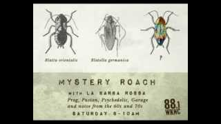 Mystery Roach: New Morning