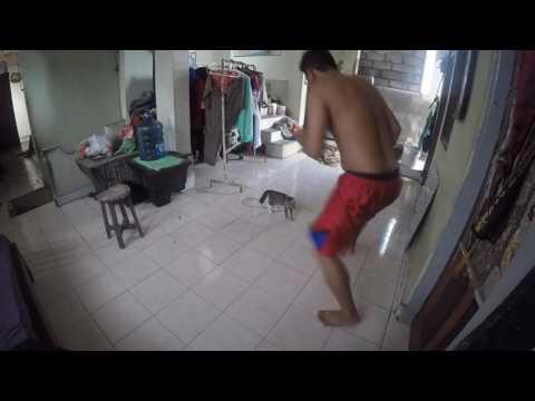 Main Kucing Kucingan Mp3
