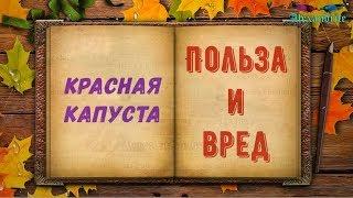 Краснокочанная капуста-Польза и вред_(Здоровье)_Alexandrite