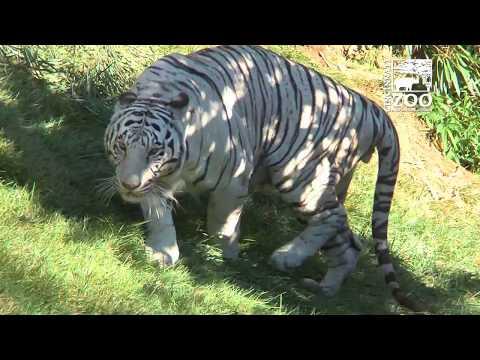 Special Care for Cincinnati Zoo's Senior Citizens