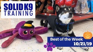 Solid K9 Training Center Best of the Week 10/21/19