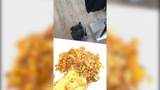Kylo macht Auge auf den Nudelauflauf!😂 MontanaBlack Instagram Story