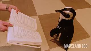 Lilly the Penguin Checks Out Books at the Library