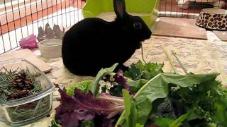 Adoptez la lapine Luna! - Adopt Luna the rabbit! Video 2