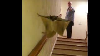 Slo-mo Stair Flight 3