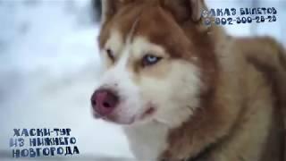 Хаски на миллион | Хаски тур из Нижнего Новгорода  husky