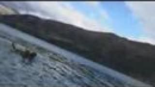 ブログ「羊の国のラブラドール絵日記」の主役の2匹のラブラドール犬「...