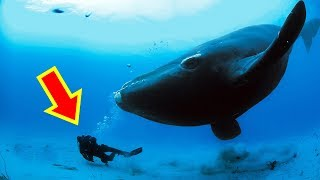 10 Strange Things Encountered By Divers