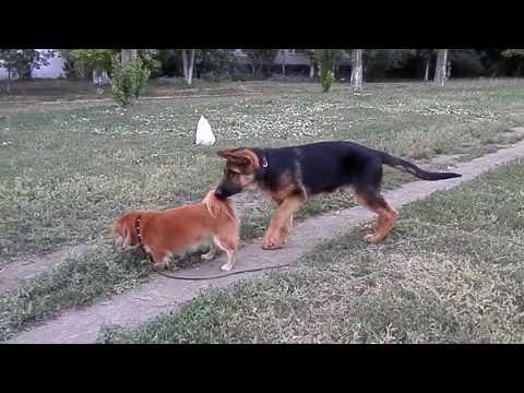 Купите интерактивную собаку с бесплатной доставкой по уфе в интернет магазине. Интерактивная игрушка furreal friends игривый щенок 24 см.