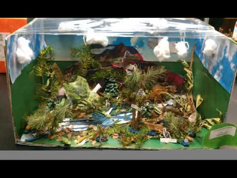tropical rainforest biome project