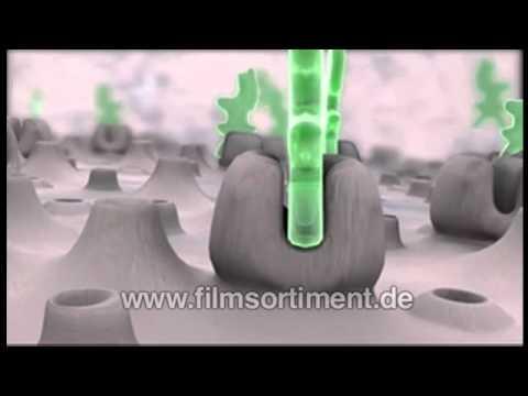 Schulfilm: HORMONE - E-MAILS DES KÖRPERS II: PUBERTÄT UND STRESS (DVD / Vorschau)