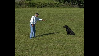 How to Develop a Great Dog with Bill Hillmann (Part 2)