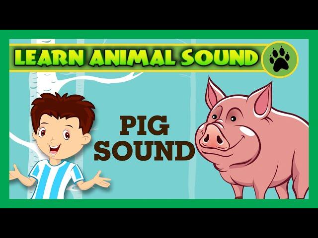 Animal Sound for Children | Pig Sound, Goat Sound, Camel Sound | Kids Hut
