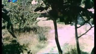 Vasko da Gama ot Selo Rupcha 1
