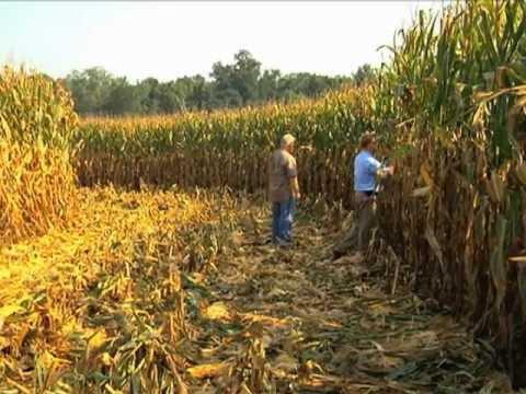 Georgia Farmer Sets New State Corn Yield Record