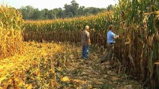 Georgia Farmer Sets New State Corn Yield Record