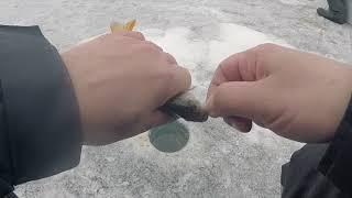 Апрельская рыбалка для души в Верховьях Белоярки