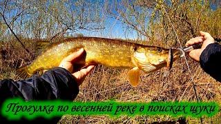Рыбалка на щуку в мае на малой лесной реке