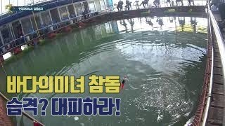 만정좌대낚시 바다의미녀 참돔 습격 입질 영상만쿨fish…